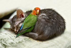 CATandPARROT-friends